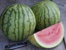 vنlja perfekta vattenmelonen