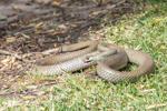 """serpent recrache إ""""ufs"""