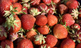 Mansikkatiloilla vaikeuksia saada kausityِntekijنt oikeaan