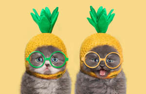 Kittens with pineapple hat and glasses eyes, yellow background.