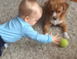We can't handle the cute! Dog and baby play ball