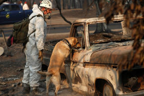 UPDATE: List of the top 10 deadliest California wildfires.