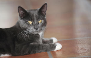 Smokie at its home in Hull. The five-month-old cat was found by workers at a rec...